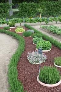 herbs in pots in garden