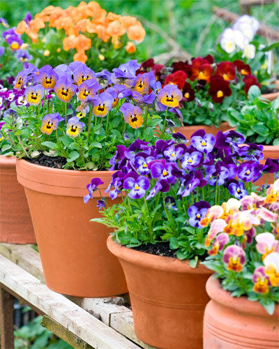 Potted plants bankwhitt academy for Easy plants to grow in pots outside
